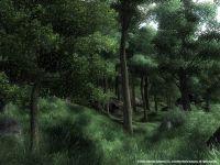 Alter Wald mit neuen Blättern